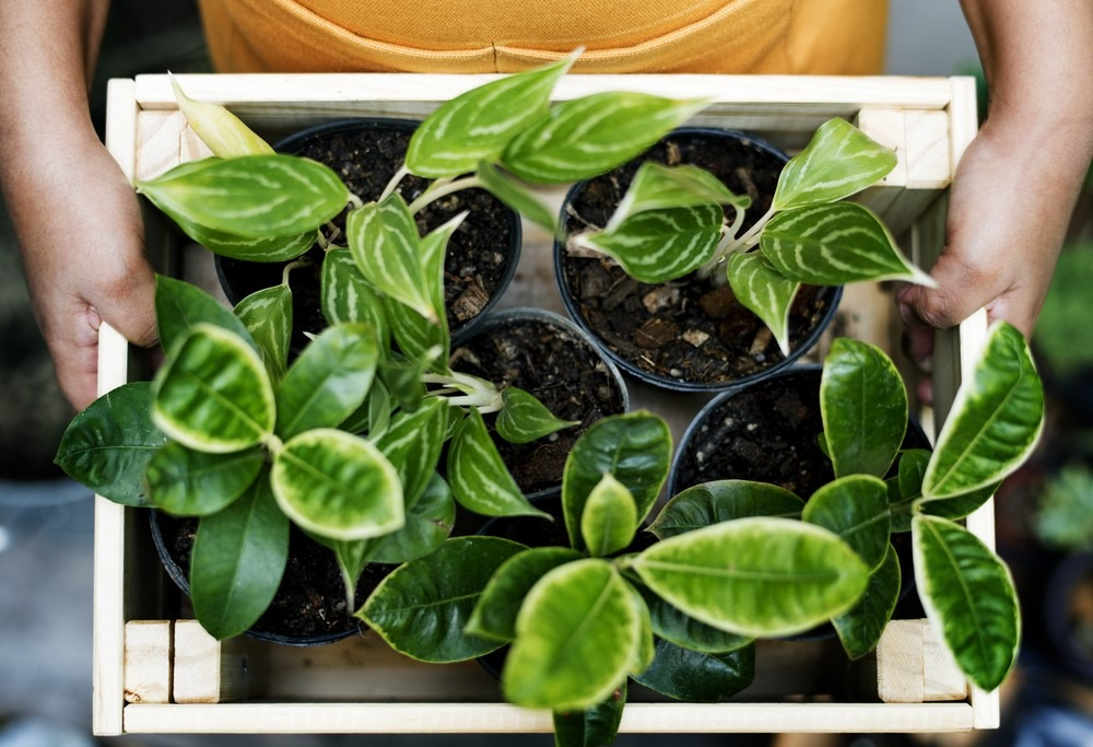 Best plants for the home