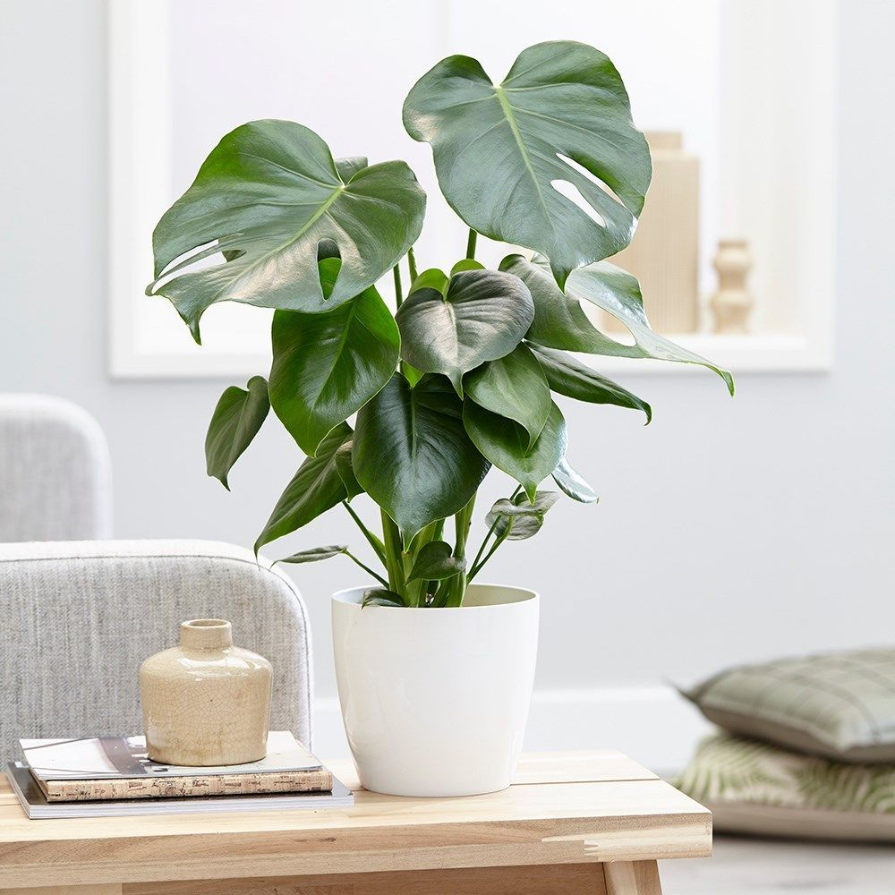 Indoor plants help you to love your home