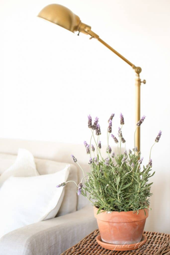 spring decor lavender